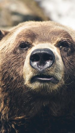 papers.co mp73 bear face what the hell nature animal 33 iphone6 wallpaper 250x444 - Tapety pro iPhone ke stažení (10. 7. 2019)