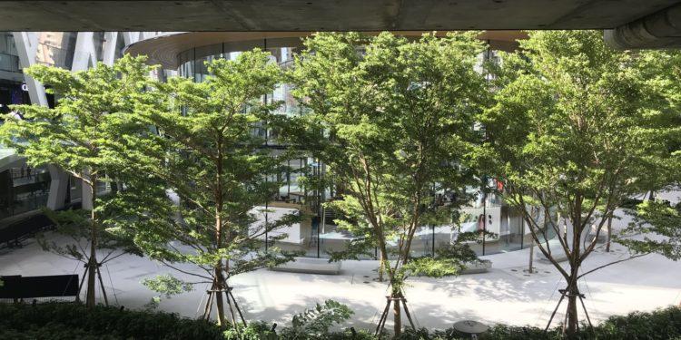 applebangkoktrees 750x375 - Podívejte se dovnitř nového Apple Store v Bangkoku